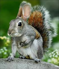 Honest. I'm a squirrel