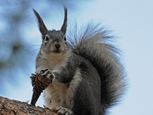 Squirrel antennae --wouldn't they be rabbit ears?